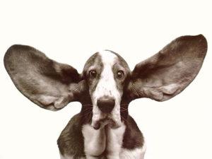Active listening, skills of listening, from Blue Bridge Leadership in Grand Rapids, Michigan